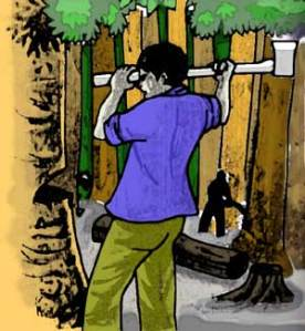 kapak-vs-pohon